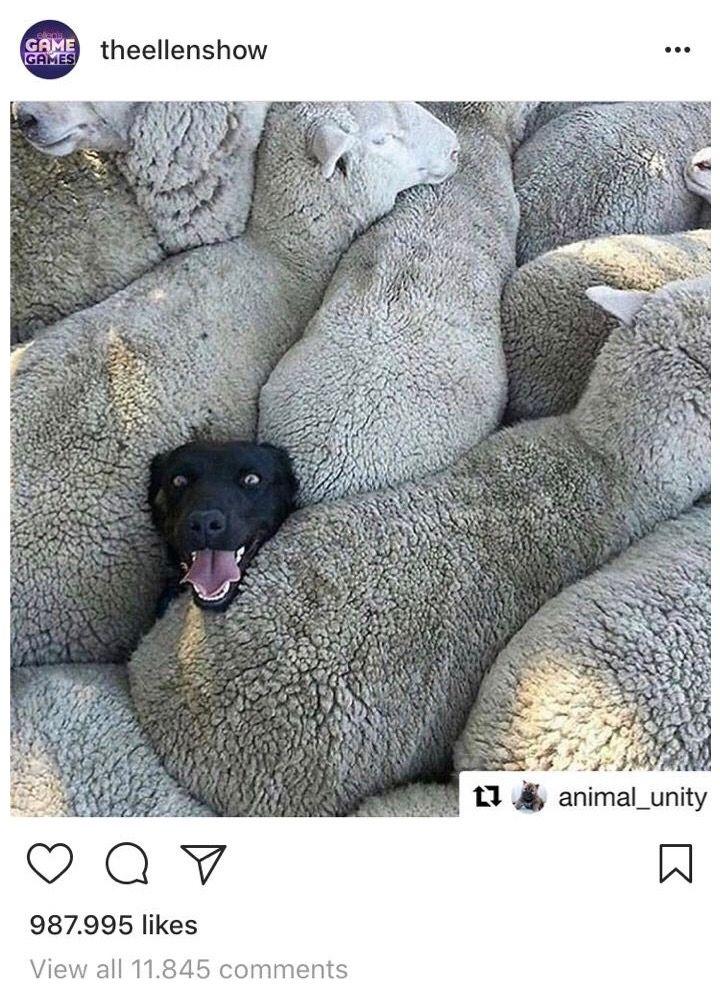 Instagram followers theellenshow