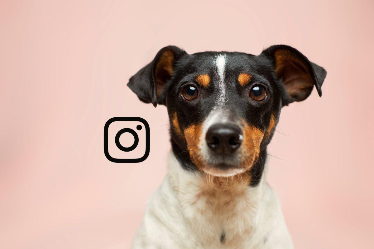 7 Key Instagram Tips to Grow your Instagram Pet Account 1